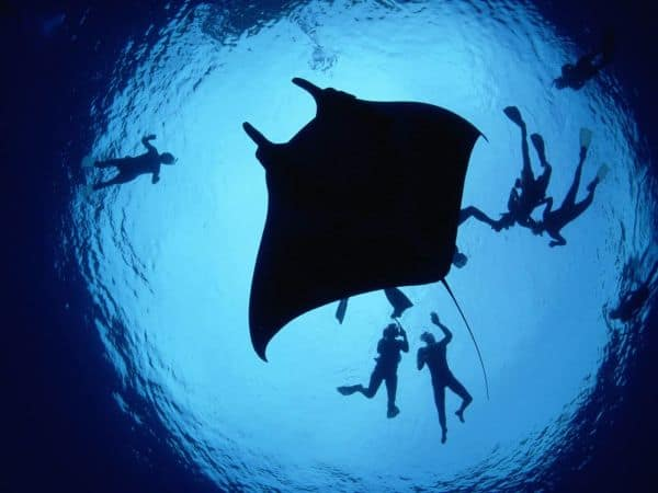 divers with manta ray experiences
